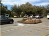tree stump in parking lot